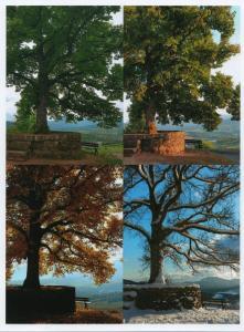 arbre-saint-gilles-4-saisons